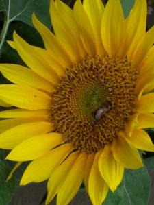 natural beekeeping, organic honey, Bit of Earth Farm,