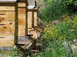 Bit of Earth Farm box beehives, organic beekeeping,