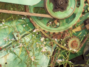 rusting farm equipment, Bit of Earth Farm,