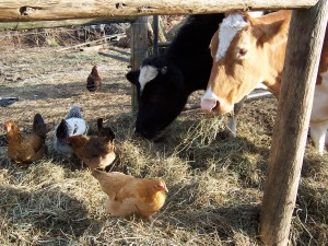 humane farming, homesteading,