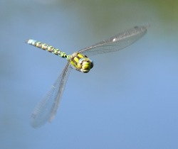 dragonfly hope poem, dog walking poem,