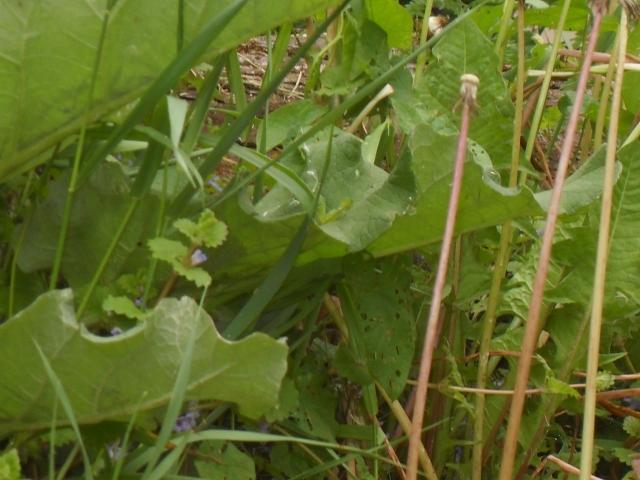 weeds,