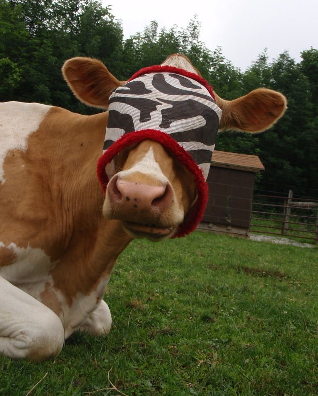 cow fashion, cattle fly mask,