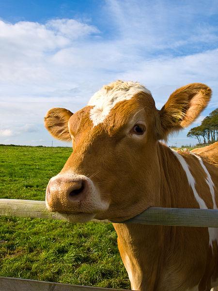 Saving A Neighbor's Farm | Bit of Earth Farm