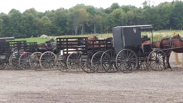 Amish produce auction,