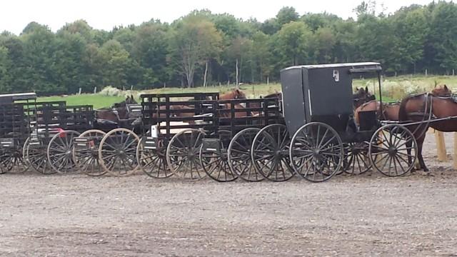 Amish produce auction,