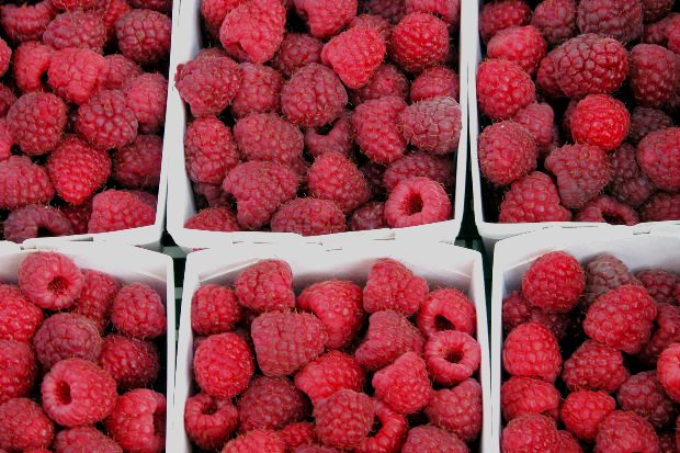 produce auction, food auction, local organic raspberries,
