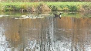 Al the duck.
