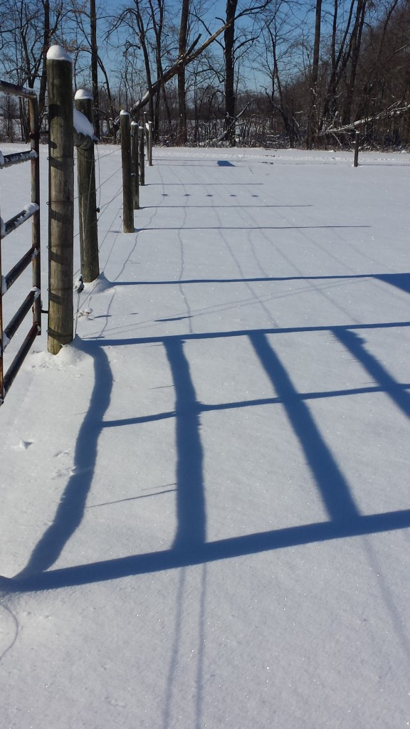 Fence post shadows look blue against the snow.