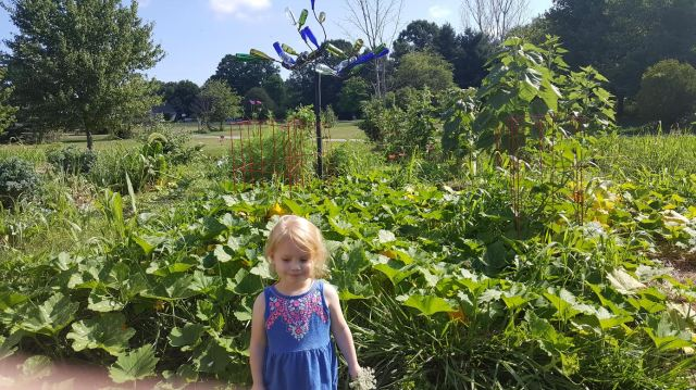 We ended up with squash in several gardens.